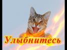 Прикольные смешные кошки собаки Позитив Для детей и не только Создай себе хорошее настроение
