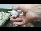 Приколы 2017 про животных Самые Смешные и Милые Животные Собаки Щенки и Коты Котята Подборка приколо