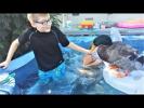 Приколы с детьми и животными Смешные дети и животные 2017 – хорошие дети любят животных