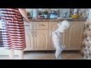 Смешные животные Самые МИЛЫЕ животные Собаки стояки и гули гопники Приколы с животными 2017 cute dog