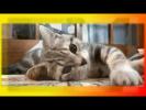 Смешное прикольное видео Для детей и не только Создай себе хорошее настроение