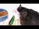 РЕАКЦИЯ НА ПРАНК КОШКИ и огурцы Угарные приколы с животными Смешные Коты  Собаки СПАСЕНИЕ cute pets