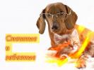Забавные и смешные животные Кошки Собаки Позитив Для детей сними стресс Создай себе настроение