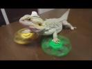 НУ ОЧЕНЬ СМЕШНЫЕ ЖИВОТНЫЕ Угарные приколы с животными Топ 2017 funny animals videos cute pets