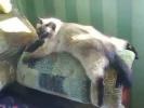 видео про кошку смешное