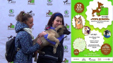 """Выставка собак приюта """"Дубовая роща"""" в Сокольниках."""
