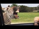 САМЫЕ НЕОБЫЧНЫЕ МИЛЫЕ И СМЕШНЫЕ ЖИВОТНЫЕ НАШЕЙ ПЛАНЕТЫ ОБИТАТЕЛИ СУШИ И ОКЕАНА amazing animals cute