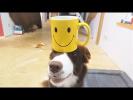 Приколы с Собаками и Приколы с Котами Собаки и Кошки Самые Терпеливые и Забавные Животные 2018