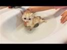 Милые и Забавные Животные Котик первый раз моется И любители Чая