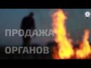 Торговля органами в Украине. Фильм-расследование Андрея Павловского