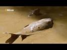 Канал документальные фильмы 2018/Африка Река Конго National Geographic смотреть нэшнл географик 2017