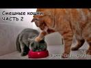 Смешные кошки #2 - подборка 2013