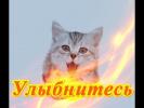 Смешное видео о животных Кошки собаки Позитив Для детей Создай себе  настроение
