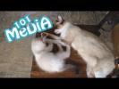 Смешные и милые животные приколы 2017 про животных Коты и собаки питомцы домашних животных про котов