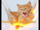 Самые прикольные животные.Кошки .Котята. Приколы с животными.Прикольные кошки