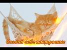 Самые смешные кот и кошки. Приколы про животных.Для детей.Создай себе хорошее настроение