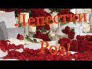 Лепестки Роз!