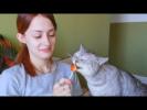 Смешные Видео про Животных Сборник Коты Кошки и Собаки Сладкоежки Приколы с Животными 2018