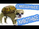 Приколы с животными|Самые Смешные Собаки Коты и Кошки|Отборные лучшие приколы 2016  2017|Дети видео