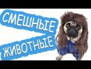 Новые смешные видео про животных|Приколы коты кошки собаки| животные к 8 марта|щенячий смех патруль