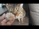 Смешные собаки Приколы про собак Смешные коты Очень милые животные видео Приколы с собаками и котами