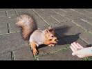 Белка и самые красивые белки реальная белка смотреть русское Видео для детей про белок и грызунов