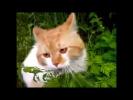 Злой кот охраняет свой огород