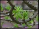 Весна на Байкале  ( смотрите  и  наслаждайтесь,  там  ещё  есть)