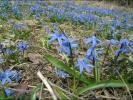 Русский размер Весна