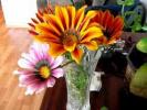 Закрывающиеся цветы. Closed flowers