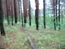 Звуки природы - лес