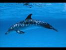 Восхищение дельфинёнка