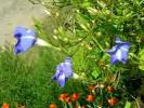 Быстрые цветы. Fast flowers