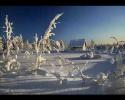 A.Vivaldi - Four Seasons  (Winter mvt 1 Allegro non molto)