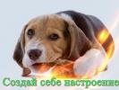 Смешные животные Позитив для детей кошки,собаки Прикольное видео Создай себе хорошее настроение