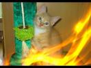 Забавные и смешные животные Кошки Собаки  Позитив Создай себе хорошее настроение