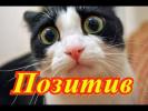 Смешное видео про животных Позитив Создай себе хорошее настроение