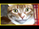 Прикольное видео о животных Смешное видео Позитив  Для детей Создай себе хорошее настроение