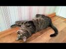 Приколы с животными Смешные собаки и Странный кот Подборка от подписчиков