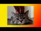 Видео про котят для детей. смешные кошки. Создай себе хорошее настроение