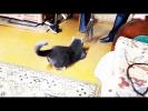 СМЕШНЫЕ КОТЫ И КОШКИ И СОБАКИ ПРИКОЛЫ 2017 ИЮНЬ Подборка Приколов про животных #59 кошка и метла