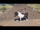 НУ ОЧЕНЬ СМЕШНЫЕ ЖИВОТНЫЕ Угарные Кони Смешные Собаки и Кошки Приколы с животными