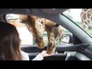 УДИВИТЕЛЬНЫЕ ЖИВОТНЫЕ Cамые смешные приколы про животных Funny Animals Cute Pets