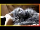 Смешные животные Видео Позитив для детей и не только Создай себе хорошее настроение