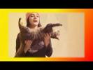Смешное видео про кошек котят Прикольные смешные кошки Создай себе хорошее настроение