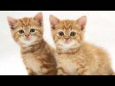 Детская песня - Два кота