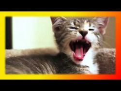 Прикольные кошки и котята Для детей и не только Смешное про кошек Создай себе хорошее настроение