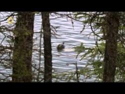 Дикая природа России  1 из 6  Сибирь