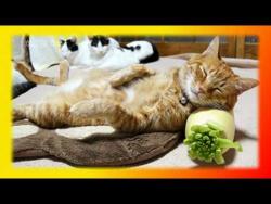 Забавные кошки видео прикольные кошки,Создай себе хорошее настроение