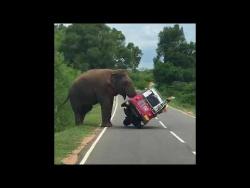 Слон перевернул ту-тук